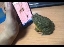 frog playing ant crusher